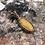 Thumbnail: Yellow Aventurine Oval