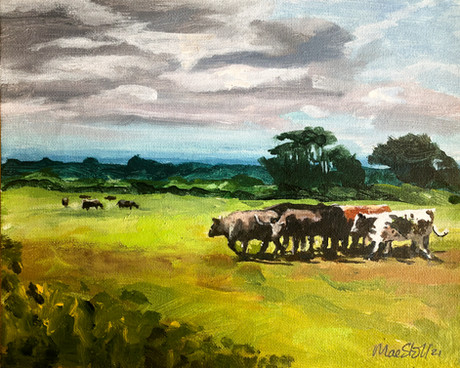 Cattle and Pasture under cloudy sky
