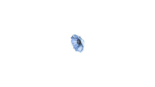 flower 03.png