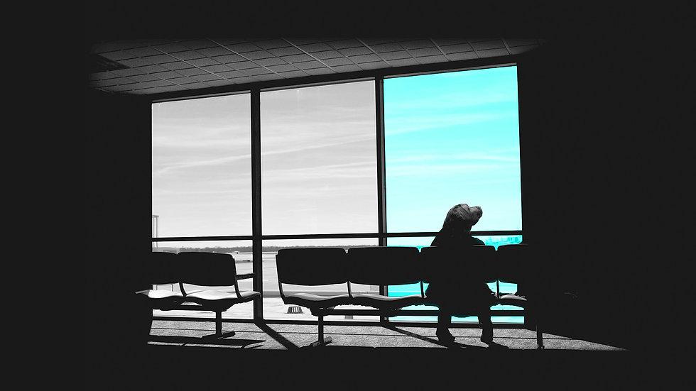 travel page waiting dog