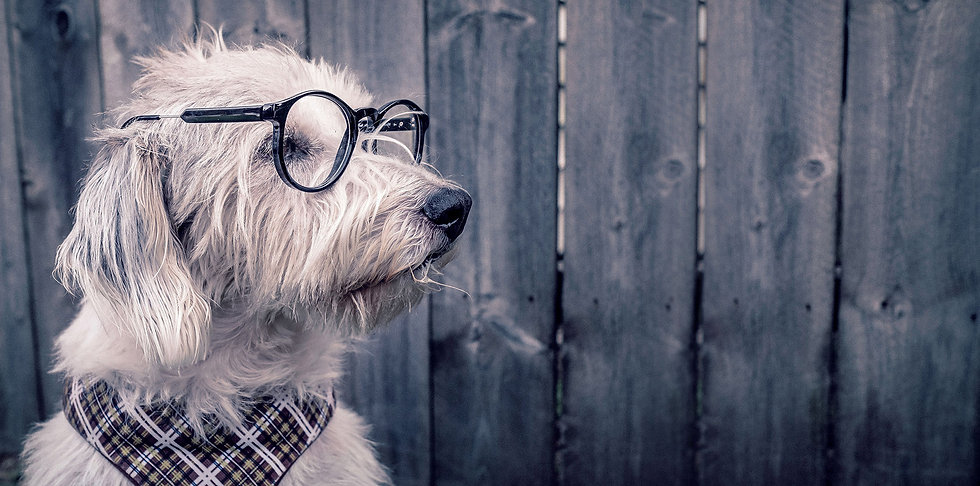Dog with glasses let's connect image