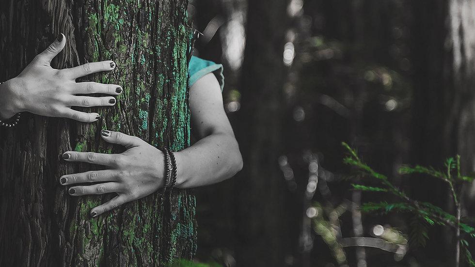 travel carbon offset tree hug