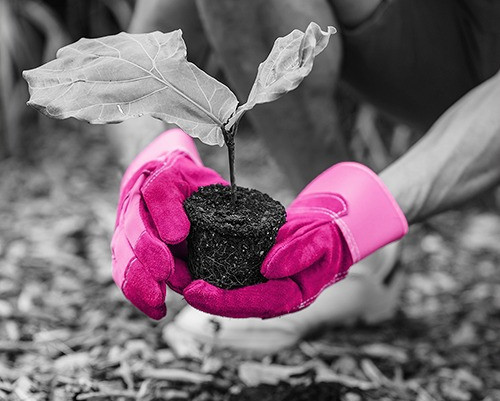 Sustainability showcase success: embedding a green business culture into Agiito