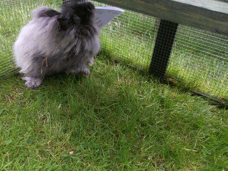 Online rabbit shows!