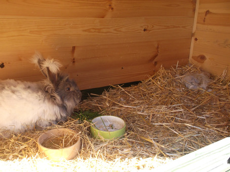 The first Angora nest of the year