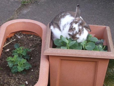 Rabbits are social animals....
