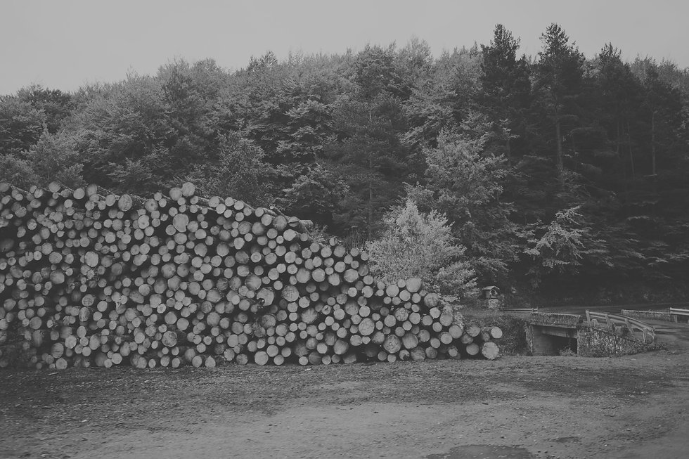 Pile%20of%20forested%20logs_edited.jpg