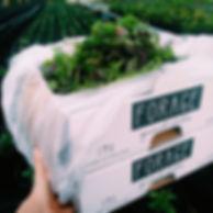 Seasonal 500 gram box photo.jpg