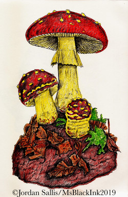 Fly agaric study of Annette Townsend's wax sculpture