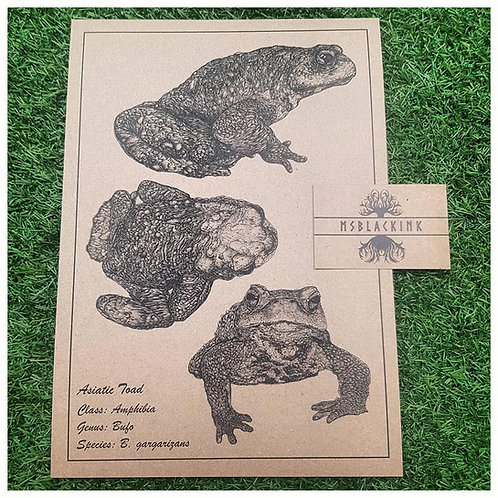 Asiatic Toad A4 Limited Edition Signed Print 2020