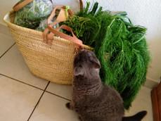 Panier de légumes: les recettes
