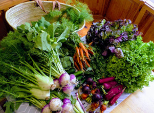 Panier de légumes: les recettes / Gartengmüse Rezepte