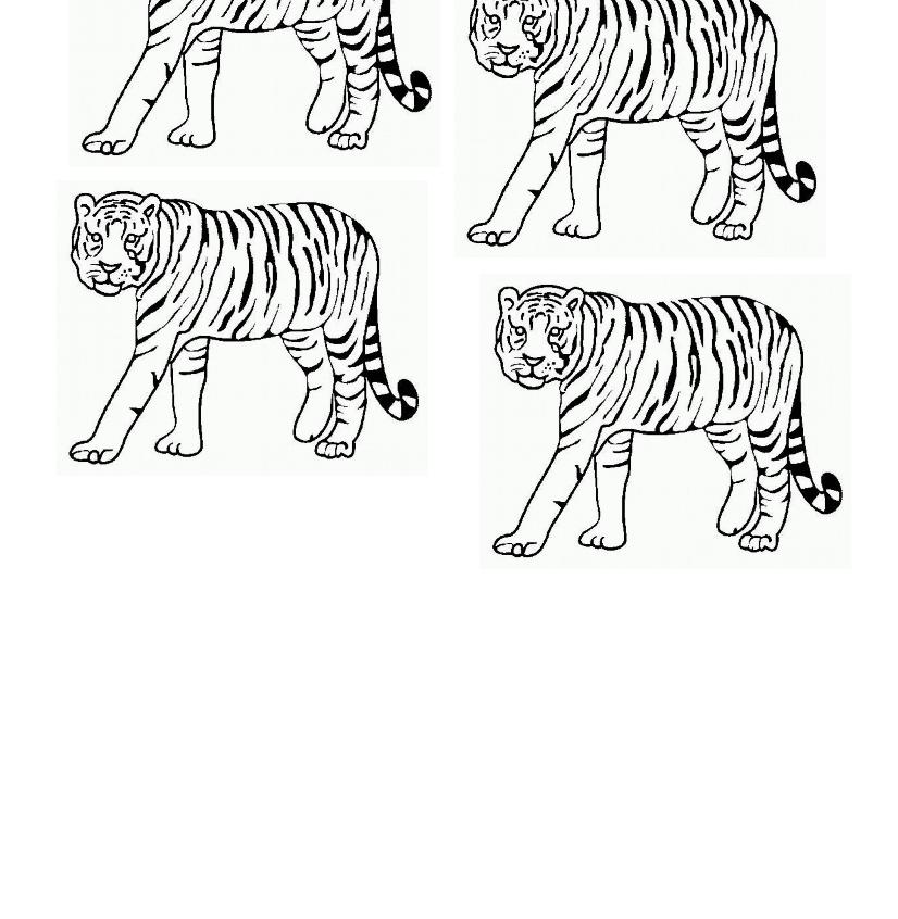 Modele tigres