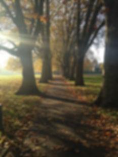 Path in fall.jpg
