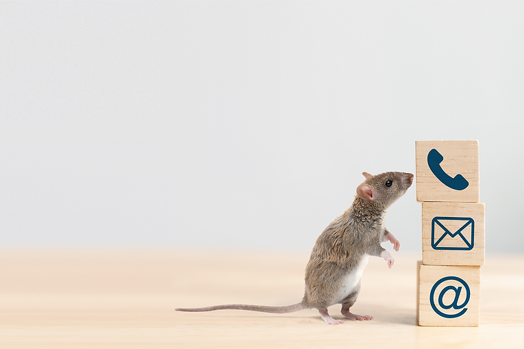 Bargain pest control contact mouse1.png