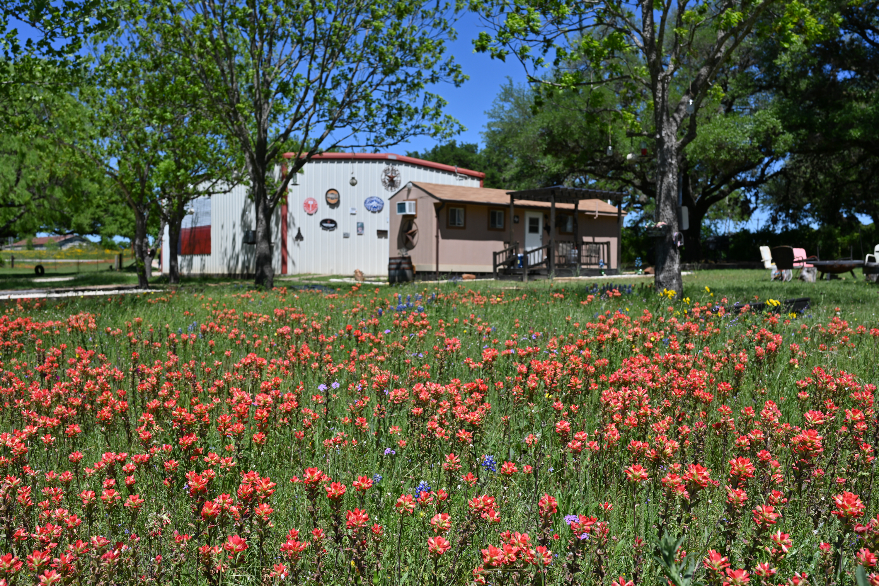 Klein Peach Cottage thru wildflowers