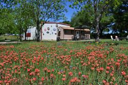 Klein Peach Cottage thru wildflowers