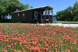 Sonnen Haus thru wildflowers