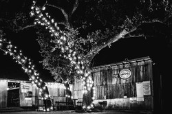 Live music at Luckenbach