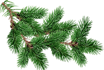 pine needles.png
