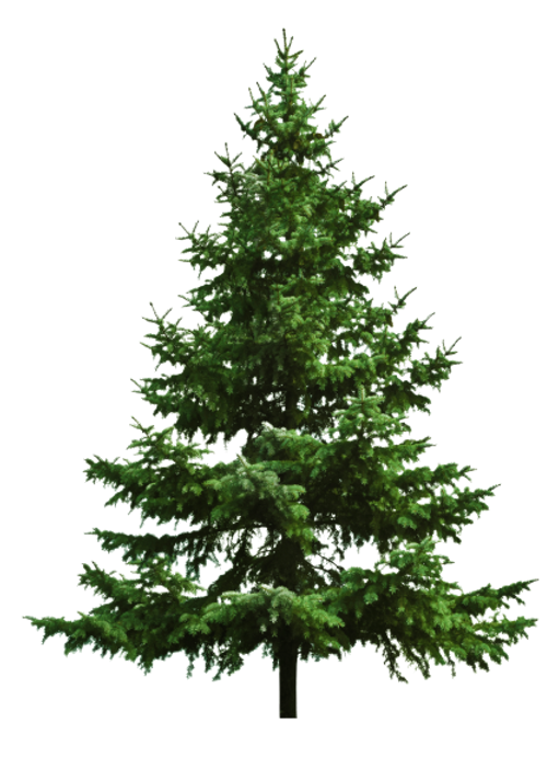 pine_tree-removebg-preview.png
