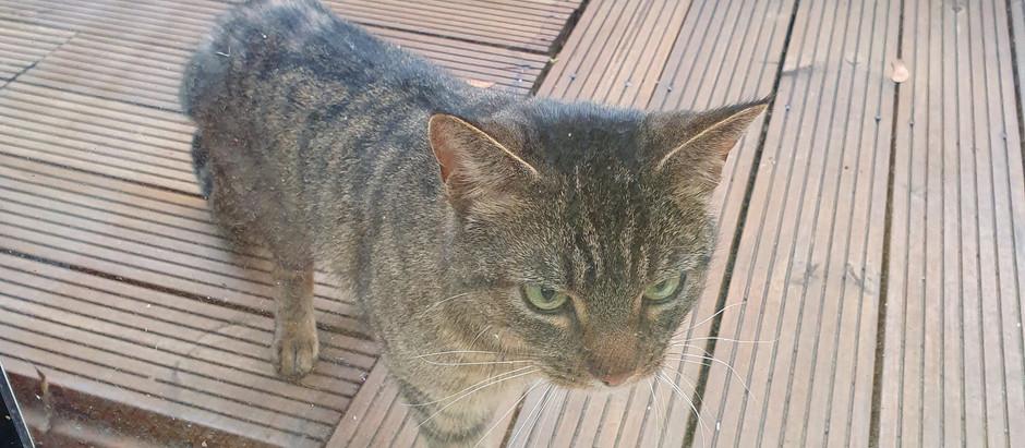 Stray cat maintenance and feeding