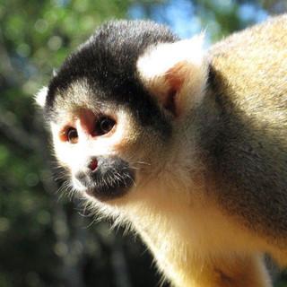 monkey-sanctuary-24.jpg