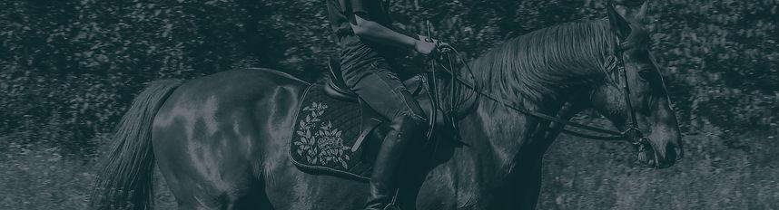 Horse-Banner.jpg
