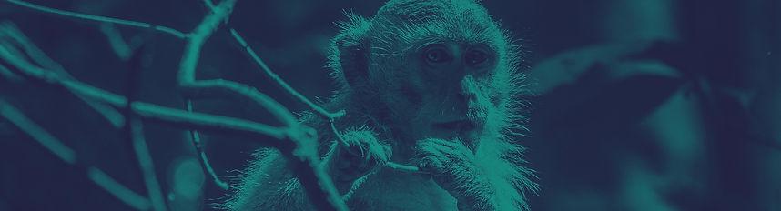 Monkey-Banner.jpg