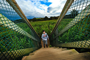 boy kid bridge corn maze