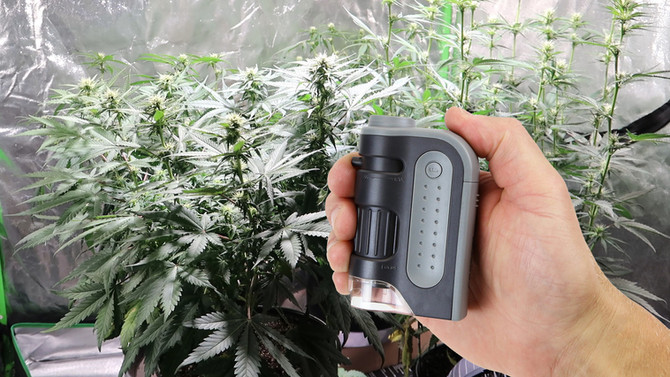 Best Magnification Devices for Inspecting Your Plants!