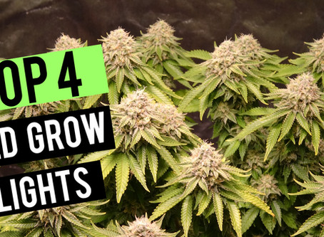 Top 4 LED Grow Lights 2019   2x2 Coverage Area