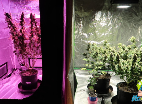 Cut Your Grow Room Costs With These 3 Hacks!