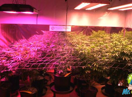 LED Grow Light Buyers Guide 2019   Indoor Cannabis Gardening