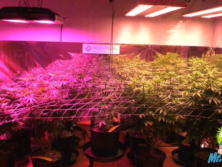 LED Grow Light Buyers Guide 2020