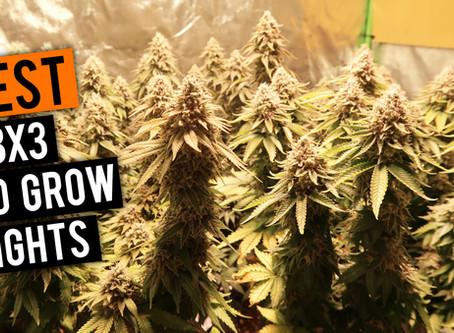 Best LED Grow Lights 2020 | 3x3 Coverage Area