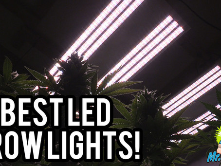 Best LED Grow Lights 2019 | 4x4 Coverage Area