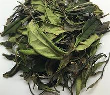 Organic White Tea 1st Flush Japanese Tea