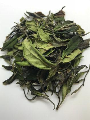 Organic White Tea (1st Flush)