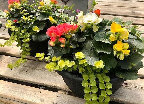 Begonia Bowl