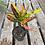 Thumbnail: Croton