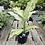 Thumbnail: Dieffenbachia Camouflage