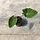 Thumbnail: Colocasia Sangria