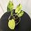 Thumbnail: Philodendron Burle Marx Variegata #2112