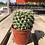 Thumbnail: Cactus