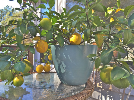 Story of the Lemon Tree