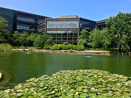Cleveland clinic lily pads.jpg