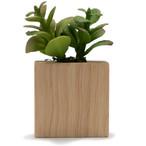 Fake Plant 1.jpg