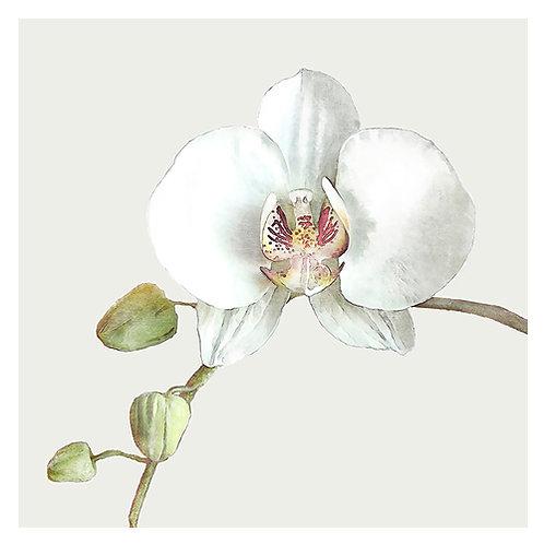"Design servietter ""Orchid Khaki"" 33 x 33 cm 3-lag 20 stk."