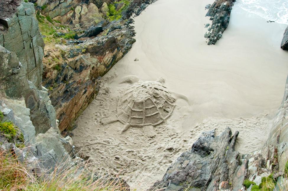 Temporary Turtle